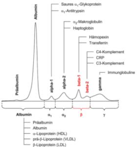 Kontrollserum Kapillarelektrophorese
