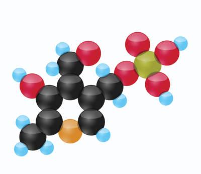 Pyridoxalphosphate (PYP)