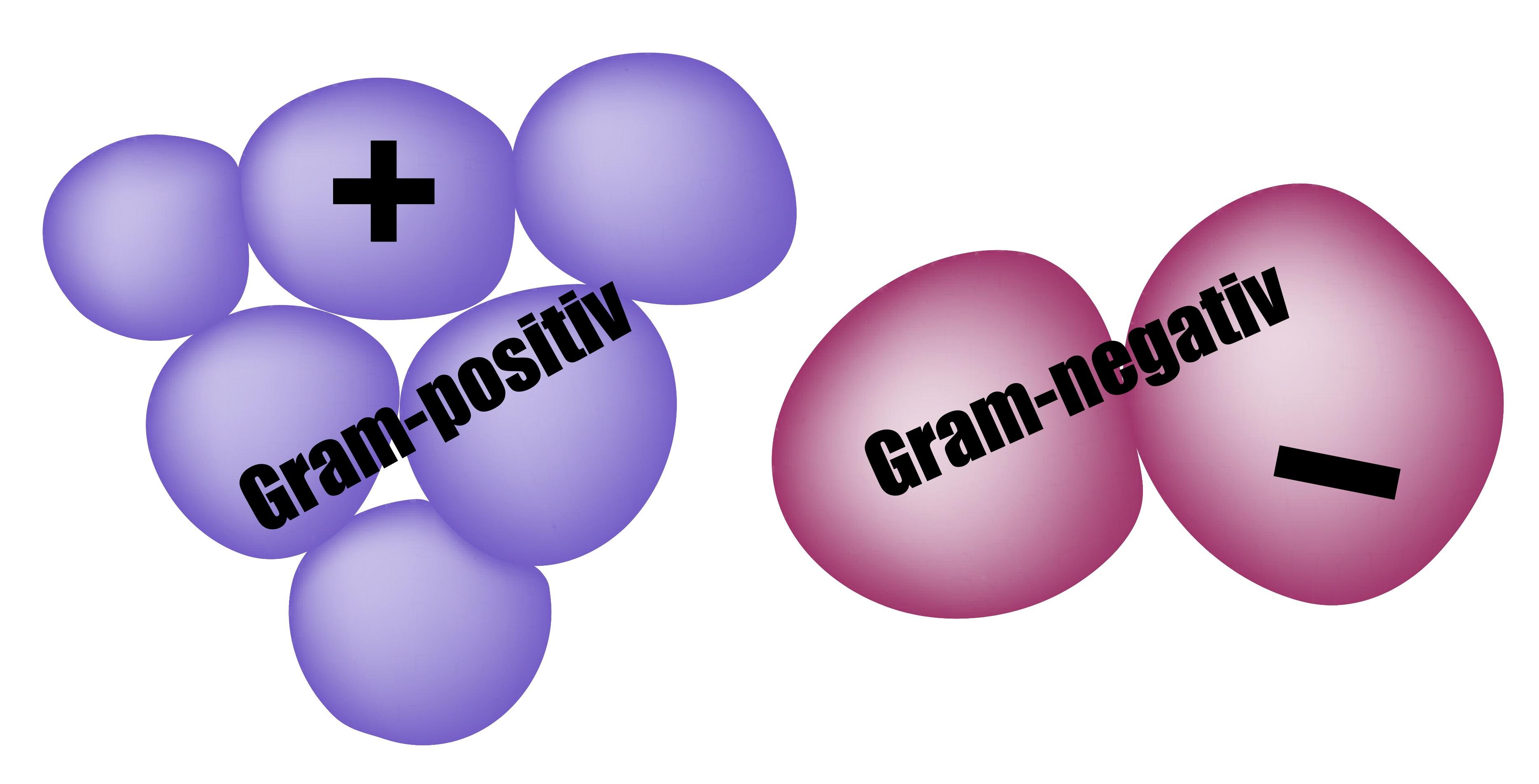Gram-reaction