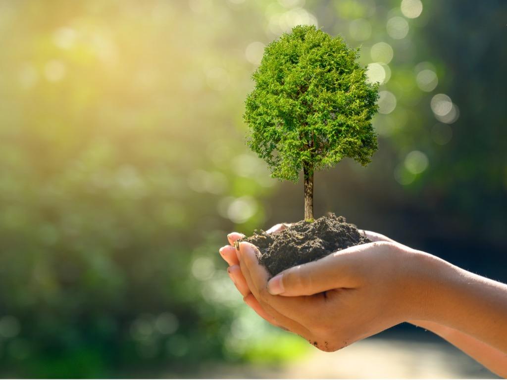 Wir schenken Ihnen einen Baum